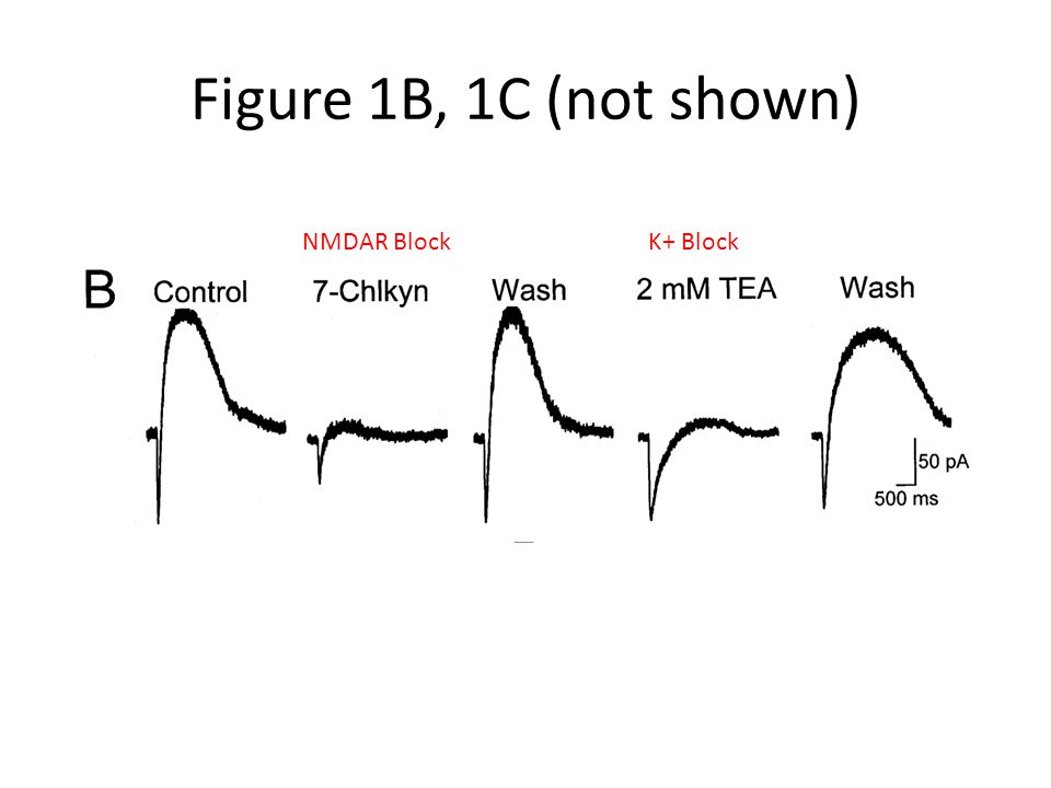 Figure 1B, 1C (not shown) NMDAR BlockK+ Block