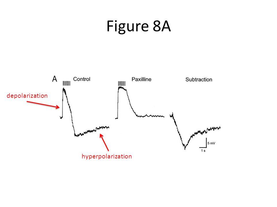 Figure 8A hyperpolarization depolarization