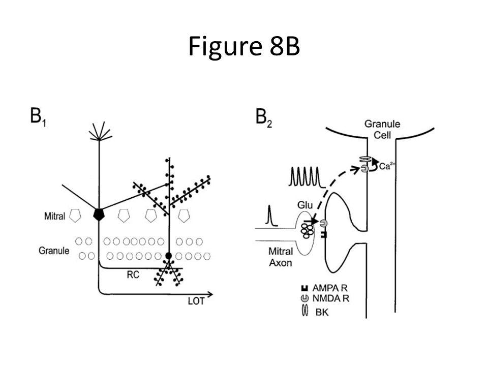 Figure 8B