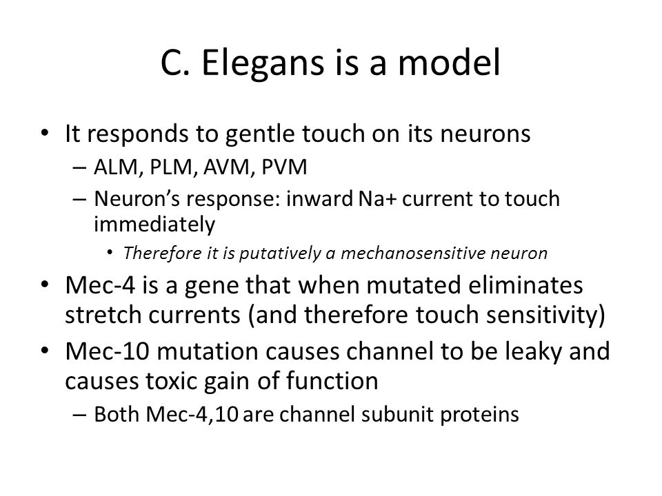 C. Elegans is a model It responds to gentle touch on its neurons – ALM, PLM, AVM, PVM – Neuron's response: inward Na+ current to touch immediately The
