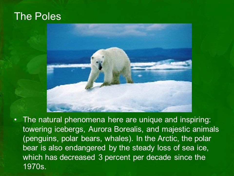 The Poles The natural phenomena here are unique and inspiring: towering icebergs, Aurora Borealis, and majestic animals (penguins, polar bears, whales).