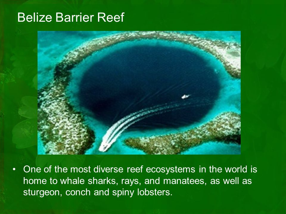 Belize Barrier Reef One of the most diverse reef ecosystems in the world is home to whale sharks, rays, and manatees, as well as sturgeon, conch and spiny lobsters.