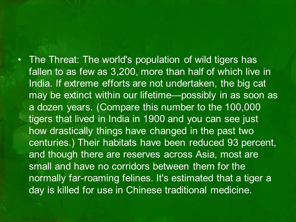The Threat: The world s population of wild tigers has fallen to as few as 3,200, more than half of which live in India.