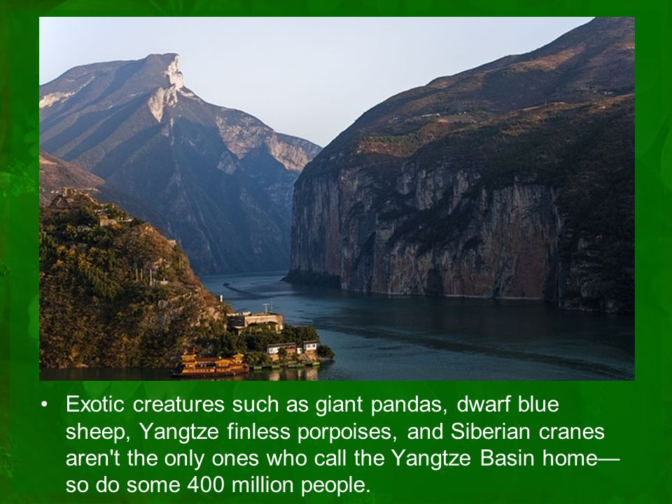 Exotic creatures such as giant pandas, dwarf blue sheep, Yangtze finless porpoises, and Siberian cranes aren t the only ones who call the Yangtze Basin home— so do some 400 million people.