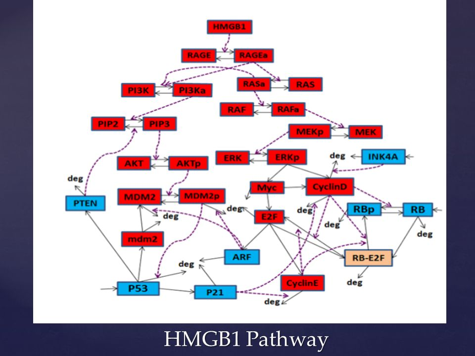 HMGB1 Pathway