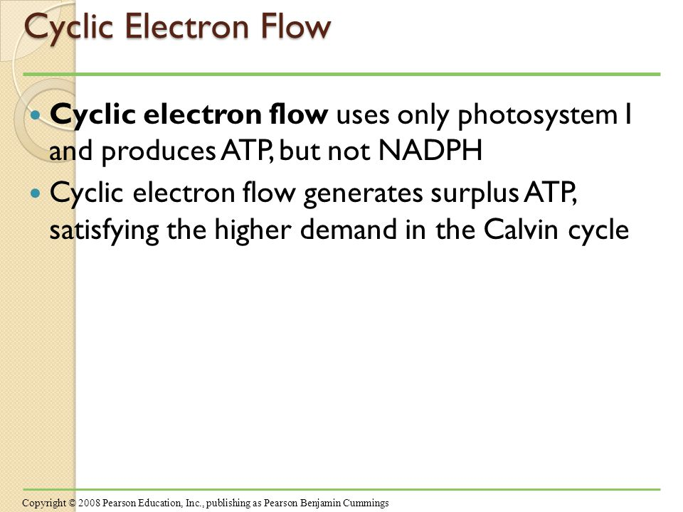 Cyclic Electron Flow Cyclic electron flow uses only photosystem I and produces ATP, but not NADPH Cyclic electron flow generates surplus ATP, satisfying the higher demand in the Calvin cycle Copyright © 2008 Pearson Education, Inc., publishing as Pearson Benjamin Cummings