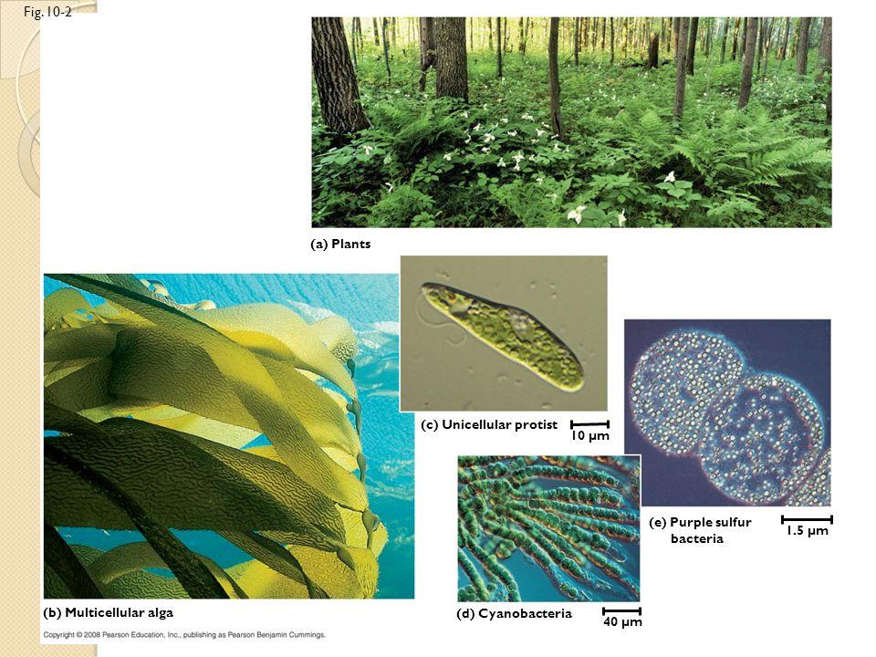 Fig. 10-2 (a) Plants (c) Unicellular protist 10 µm 1.5 µm 40 µm (d) Cyanobacteria (e) Purple sulfur bacteria (b) Multicellular alga