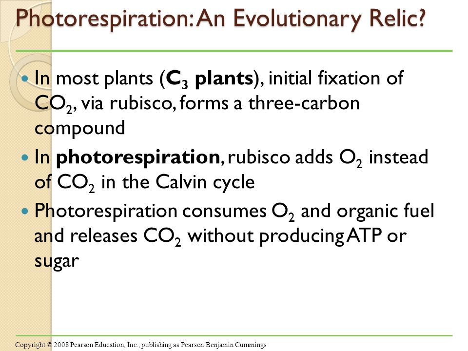 Photorespiration: An Evolutionary Relic.