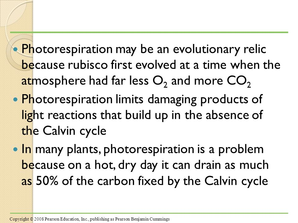 Photorespiration may be an evolutionary relic because rubisco first evolved at a time when the atmosphere had far less O 2 and more CO 2 Photorespiration limits damaging products of light reactions that build up in the absence of the Calvin cycle In many plants, photorespiration is a problem because on a hot, dry day it can drain as much as 50% of the carbon fixed by the Calvin cycle Copyright © 2008 Pearson Education, Inc., publishing as Pearson Benjamin Cummings
