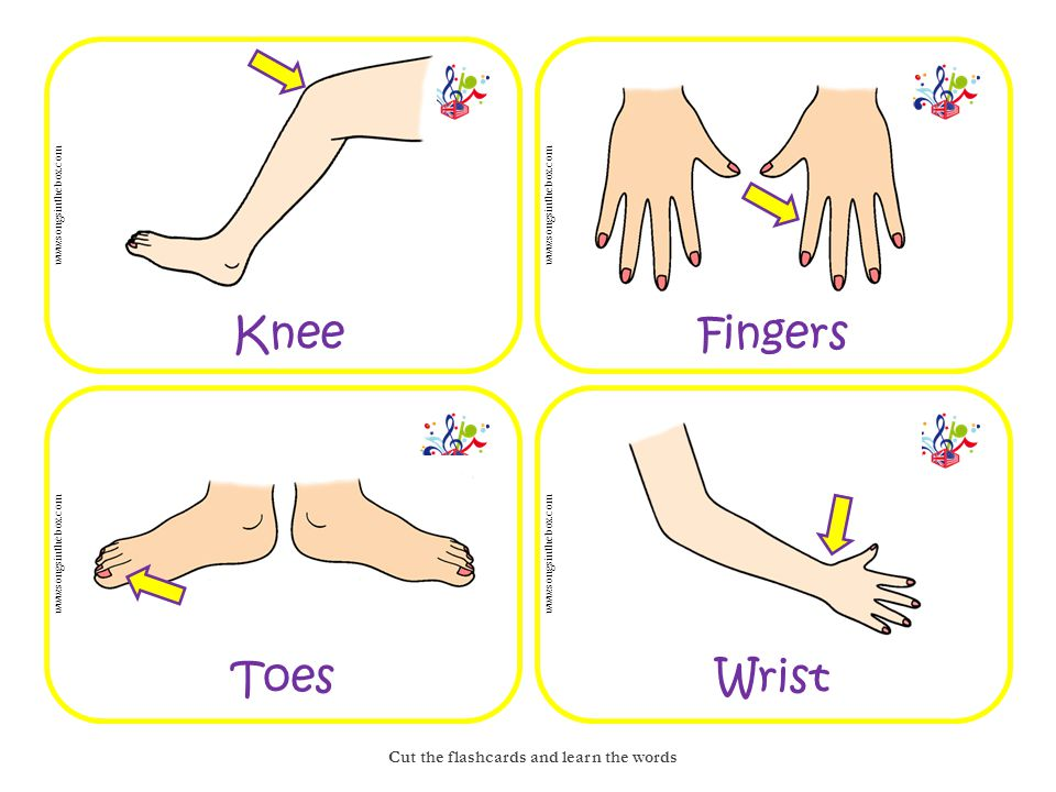 www.songsinthebox.com Circle the words Head shoulders knees and toes SHEADEF KANROSE NNIMTTE EDAFOOT EFINGER PBODYZS TOES FOOT FINGER BODY FEET HAND ARM KNEE HEAD