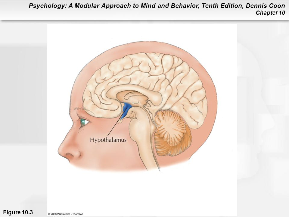 Psychology: A Modular Approach to Mind and Behavior, Tenth Edition, Dennis Coon Chapter 10 Figure 10.3