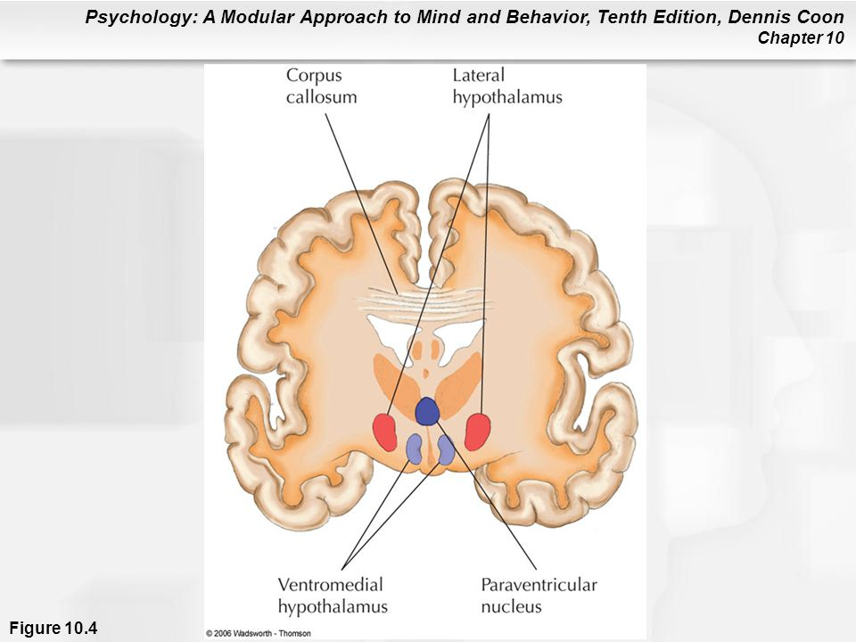Psychology: A Modular Approach to Mind and Behavior, Tenth Edition, Dennis Coon Chapter 10 Causes of Anorexia Nervosa and Bulimia Nervosa Anorectics and bulimics have exaggerated fears of becoming fat; they think they are fat when the opposite is true.