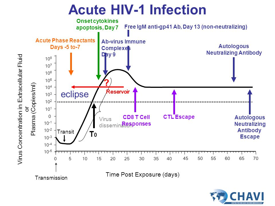 10 -5 10 -4 10 -3 10 -2 10 -1 0 10 1 10 2 10 3 10 4 10 5 10 6 10 7 10 8 Transmission Virus Concentration in Extracellular Fluid or Plasma (Copies/ml) Acute HIV-1 Infection Time Post Exposure (days) 0510152030352540 455055606570 Reservoir Virus dissemination Transit eclipse .