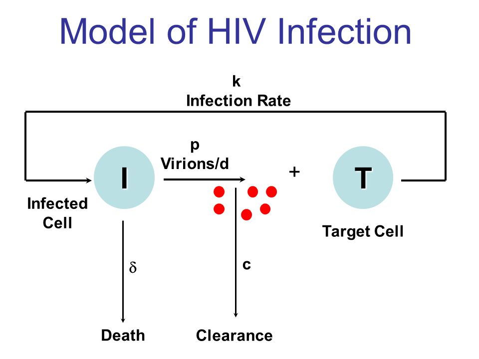 Model of Viral Infection Basic Target Cell-Limited Model T, target CD4 cells I, infected Cells V, virus λ, T cell production d, normal T cell death k, infectivity constant p, viral production c, viral clearance , infected cell death λ = 10,000 cells/μL/day d = 0.01/day c = 23/day δ, k, and p are fit.