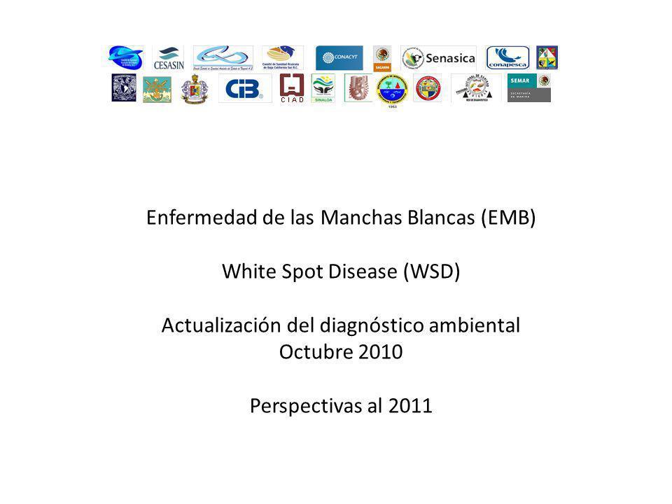 Enfermedad de las Manchas Blancas (EMB) White Spot Disease (WSD) Actualización del diagnóstico ambiental Octubre 2010 Perspectivas al 2011