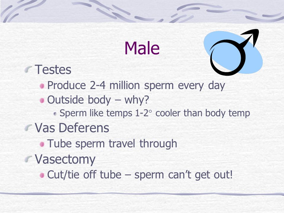 Male Testes Produce 2-4 million sperm every day Outside body – why.
