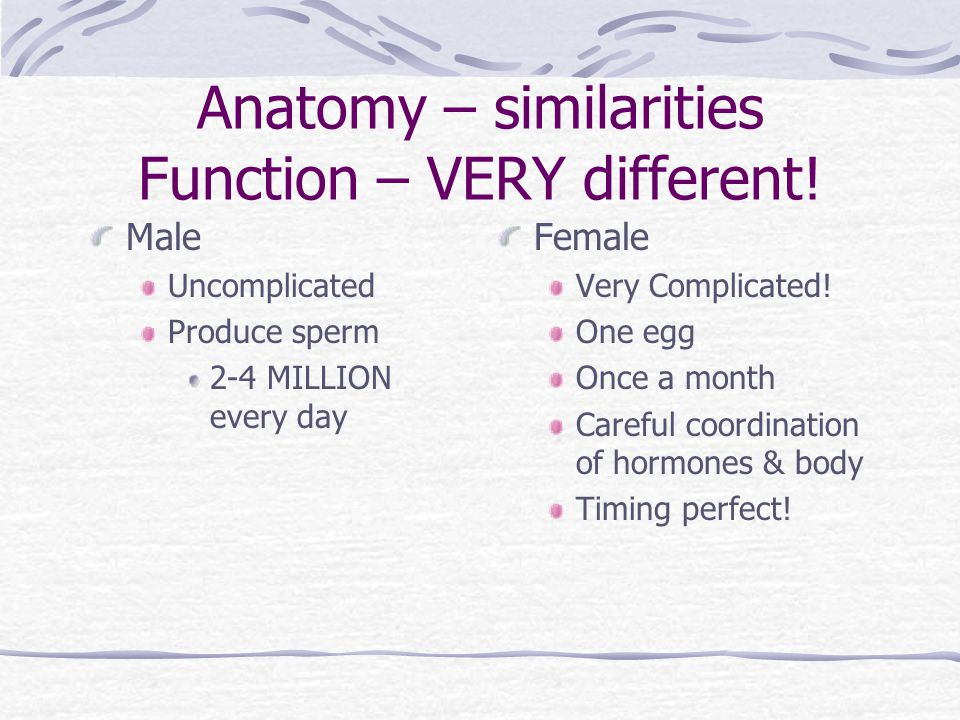 Anatomy – similarities Function – VERY different.