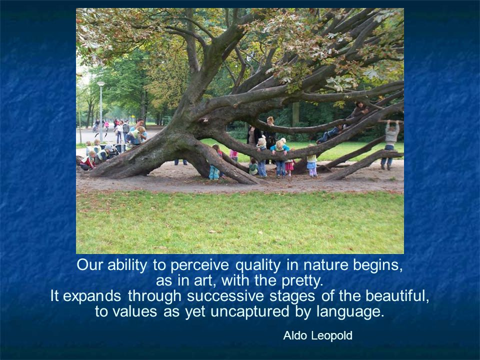 Our ability to perceive quality in nature begins, as in art, with the pretty.