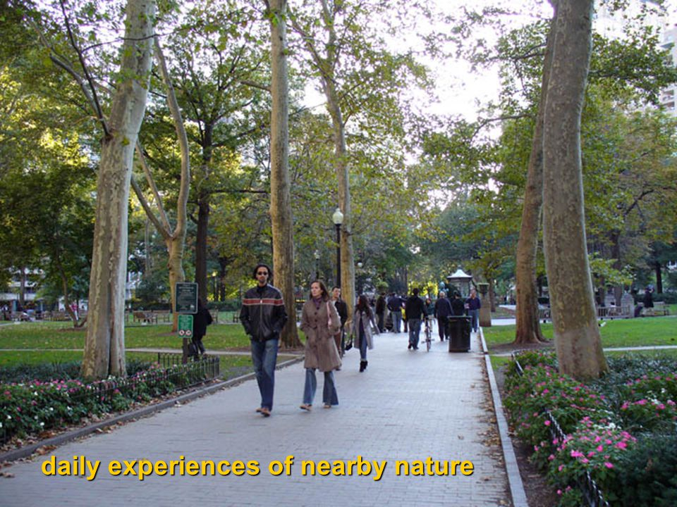 daily experiences of nearby nature