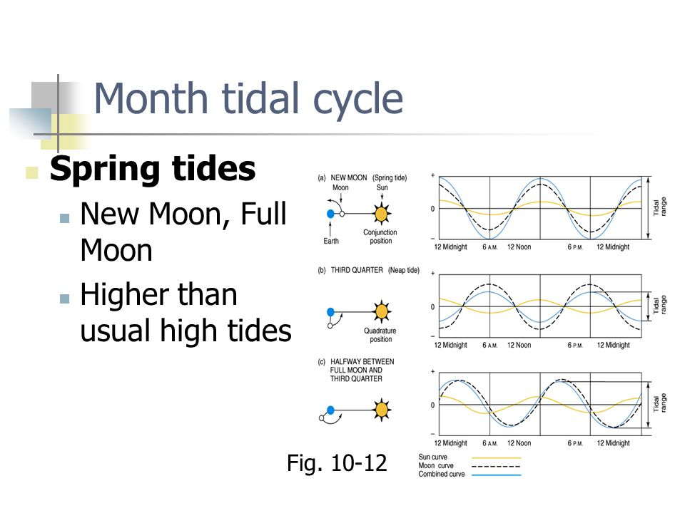 Month tidal cycle Spring tides New Moon, Full Moon Higher than usual high tides Fig. 10-12
