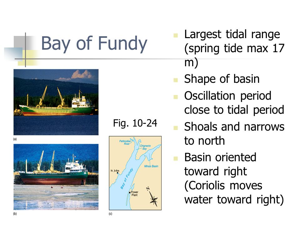 Bay of Fundy Largest tidal range (spring tide max 17 m) Shape of basin Oscillation period close to tidal period Shoals and narrows to north Basin orie
