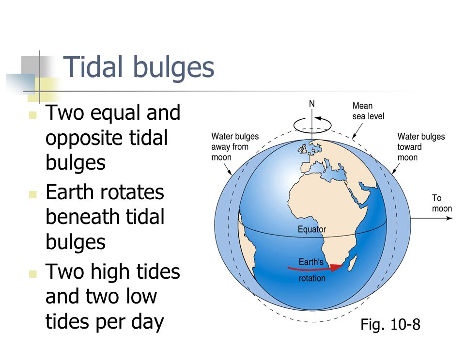 Tidal bulges Two equal and opposite tidal bulges Earth rotates beneath tidal bulges Two high tides and two low tides per day Fig. 10-8