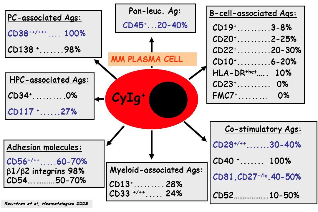 MM PLASMA CELL CyIg + PC-associated Ags: CD38 ++/+++....100% CD138 +.......98% B-cell-associated Ags: CD19 +..........3-8% CD20 +..........2-25% CD22