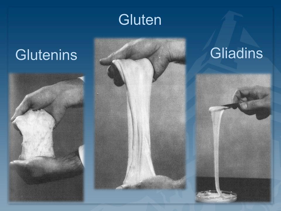Gluten Glutenins Gliadins