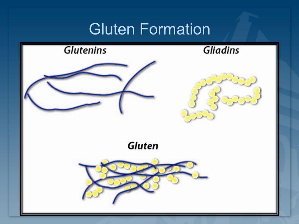Gluten FormationGluten Formation