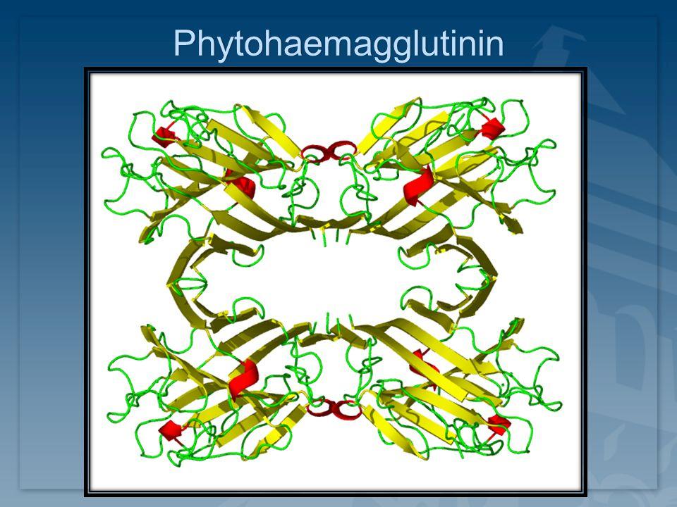 Phytohaemagglutinin