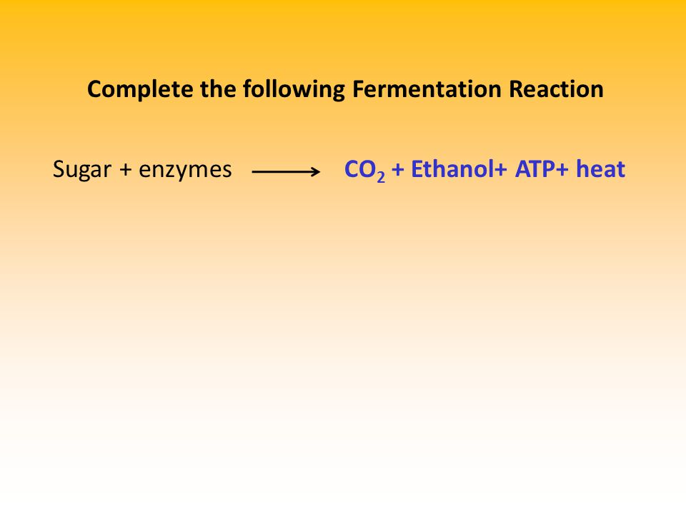 Complete the following Fermentation Reaction Sugar + enzymesCO 2 + Ethanol+ ATP+ heat