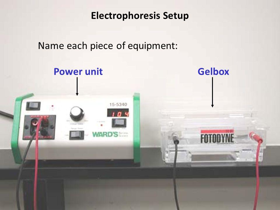 Electrophoresis Setup Power unitGelbox Name each piece of equipment:
