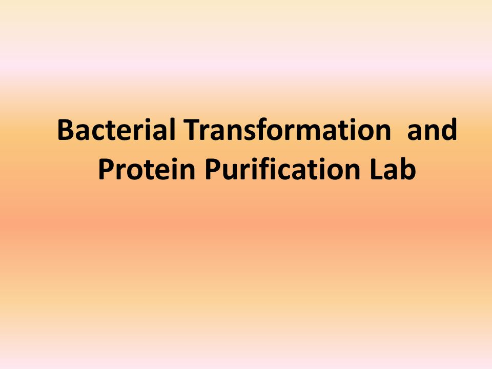 Bacterial Transformation and Protein Purification Lab