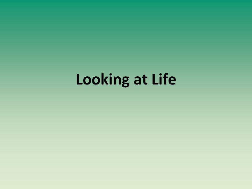 Looking at Life