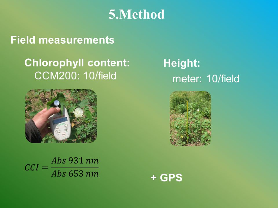 + GPS Chlorophyll content: CCM200: 10/field Height: meter: 10/field 5.Method Field measurements