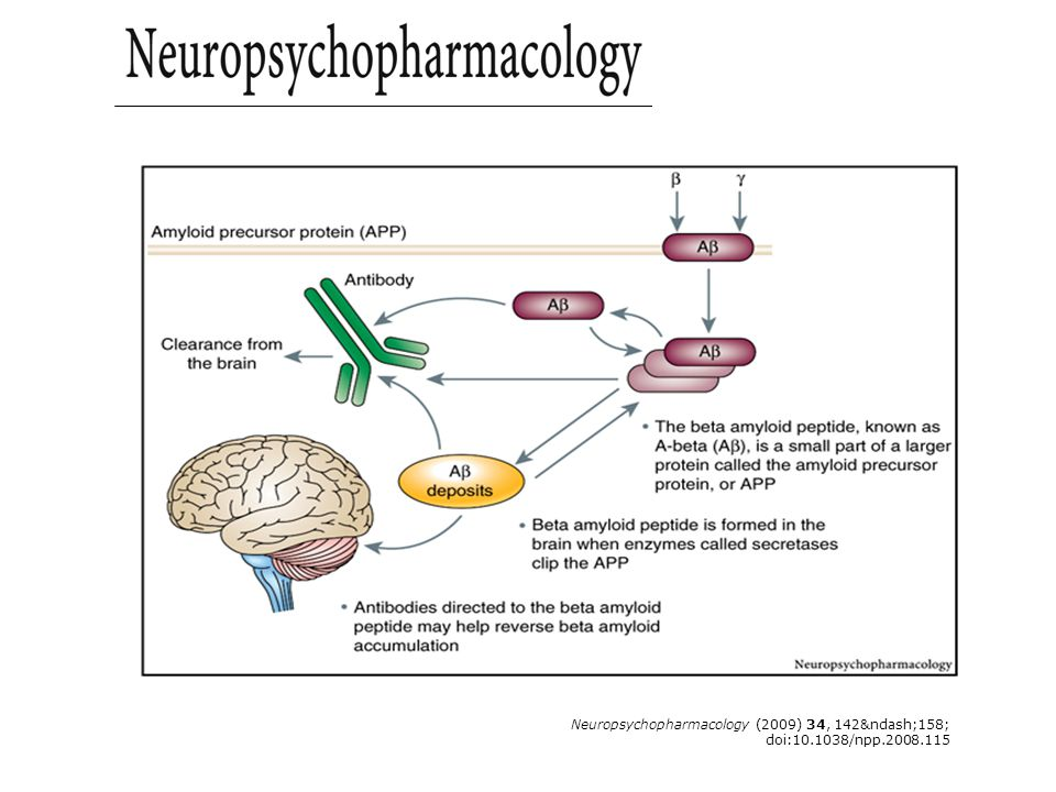 Neuropsychopharmacology (2009) 34, 142–158; doi:10.1038/npp.2008.115 Figure 6