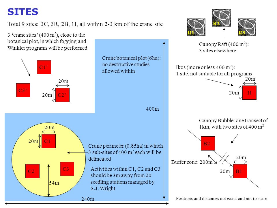 Canopy Raft (400 m 2 ): 3 sites elsewhere R1 I1 Positions and distances not exact and not to scale Total 9 sites: 3C, 3R, 2B, 1I, all within 2-3 km of the crane site B1 B2 Ikos (more or less 400 m 2 ): 1 site, not suitable for all programs Canopy Bubble: one transect of 1km, with two sites of 400 m 2 Crane perimeter (0.85ha) in which 3 sub-sites of 400 m 2 each will be delineated 3 'crane sites' (400 m 2 ), close to the botanical plot, in which fogging and Winkler programs will be performed Crane botanical plot (6ha): no destructive studies allowed within 240m 54m 400m SITES R3R2 C1C2C3 C2' C3' C1' 20m Buffer zone: 200m Activities within C1, C2 and C3 should be 3m away from 20 seedling stations managed by S.J.