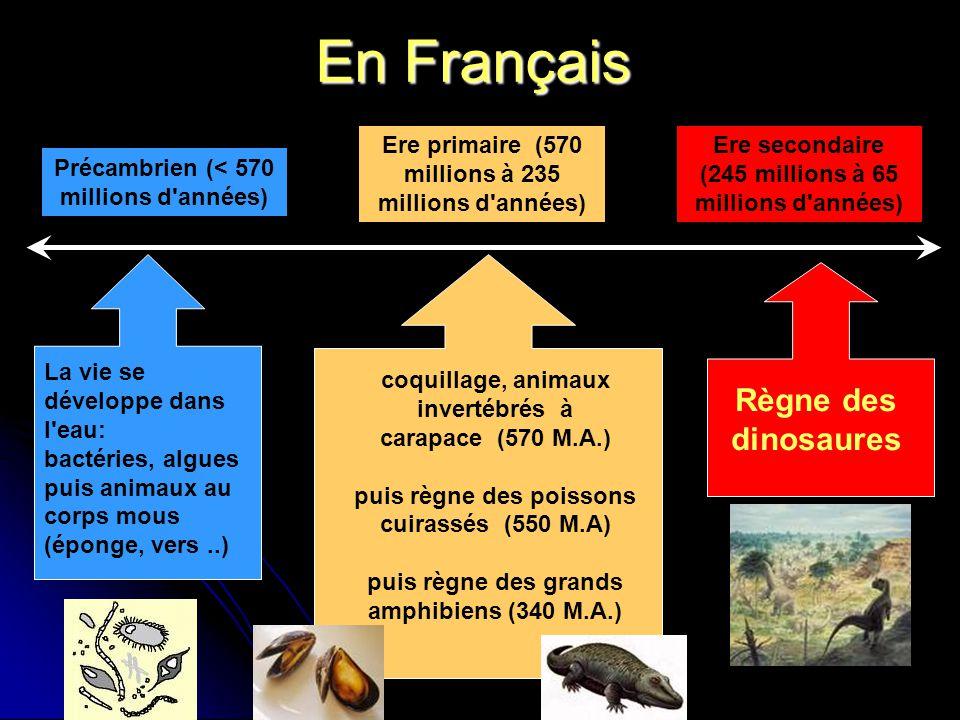 En Français La vie se développe dans l eau: bactéries, algues puis animaux au corps mous (éponge, vers..) Précambrien (< 570 millions d années) Ere primaire (570 millions à 235 millions d années) coquillage, animaux invertébrés à carapace (570 M.A.) puis règne des poissons cuirassés (550 M.A) puis règne des grands amphibiens (340 M.A.) Ere secondaire (245 millions à 65 millions d années) Règne des dinosaures