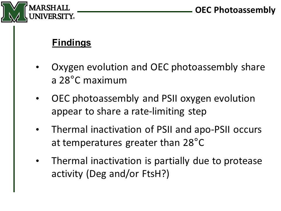 OEC Photoassembly Findings Oxygen evolution and OEC photoassembly share a 28°C maximum OEC photoassembly and PSII oxygen evolution appear to share a r