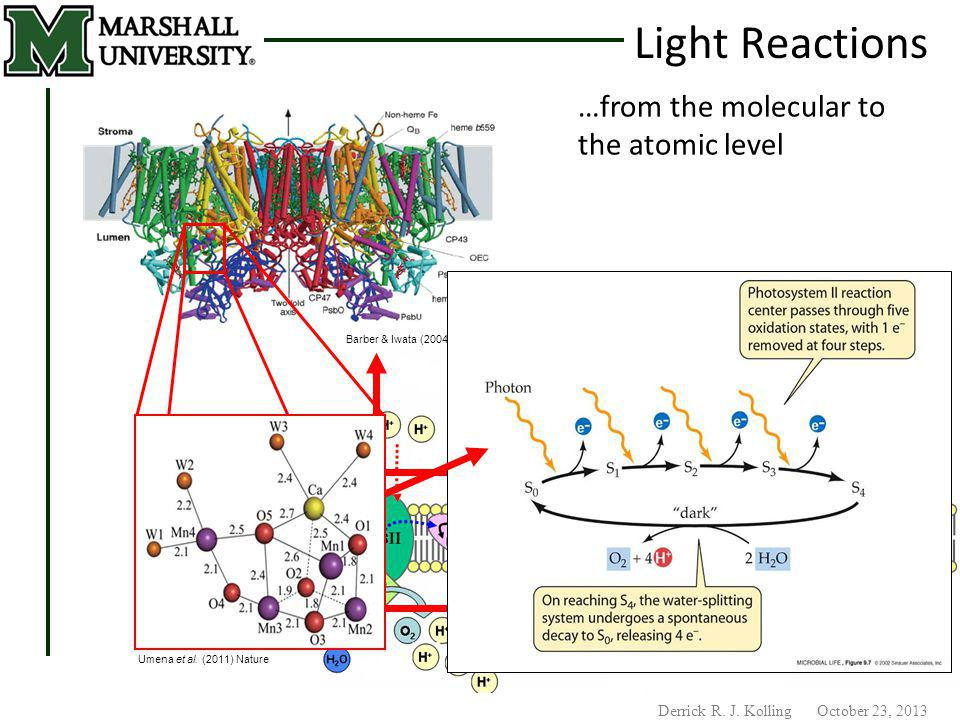 Derrick R. J. Kolling October 23, 2013 Barber & Iwata (2004) Science …from the molecular to the atomic level Umena et al. (2011) Nature Light Reaction