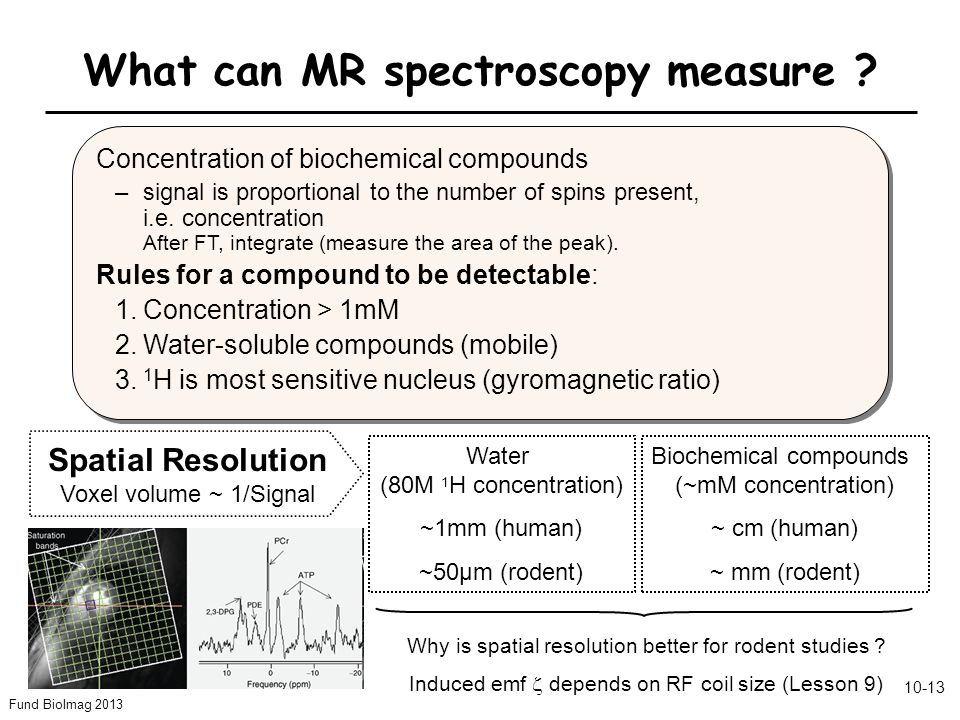 Fund BioImag 2013 10-13 What can MR spectroscopy measure .