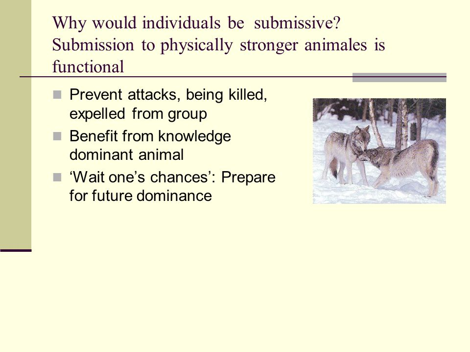 Why would individuals be submissive? Submission to physically stronger animales is functional Prevent attacks, being killed, expelled from group Benef