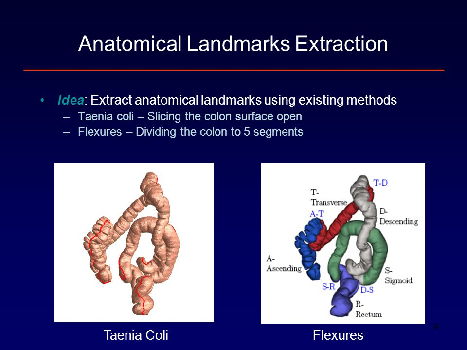 4 Idea: Extract anatomical landmarks using existing methods –Taenia coli – Slicing the colon surface open –Flexures – Dividing the colon to 5 segments