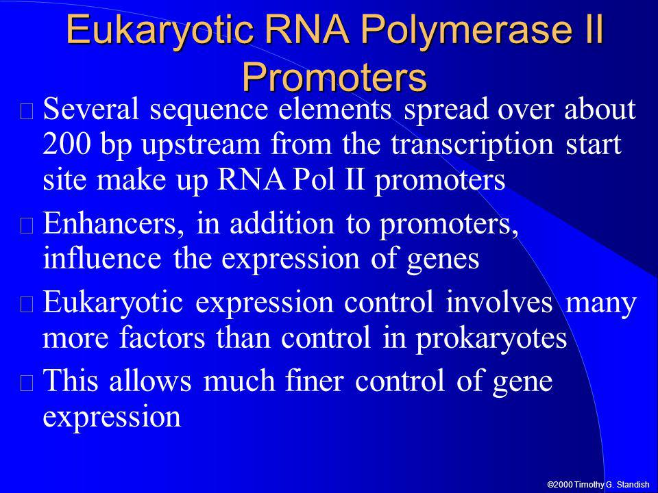 ©2000 Timothy G. Standish Eukaryotic RNA Polymerase II Promoters Several sequence elements spread over about 200 bp upstream from the transcription st