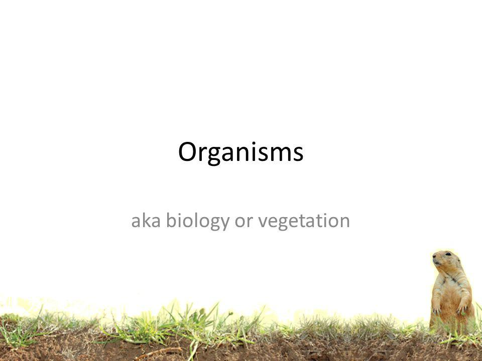 Plant roots spread out, animals burrow, and bacteria eat.