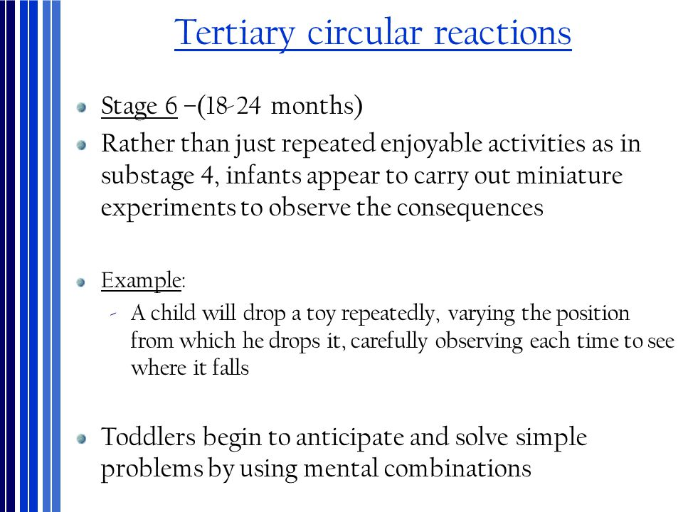 Tertiary circular reactions Stage 6 –(18-24 months) Rather than just repeated enjoyable activities as in substage 4, infants appear to carry out minia