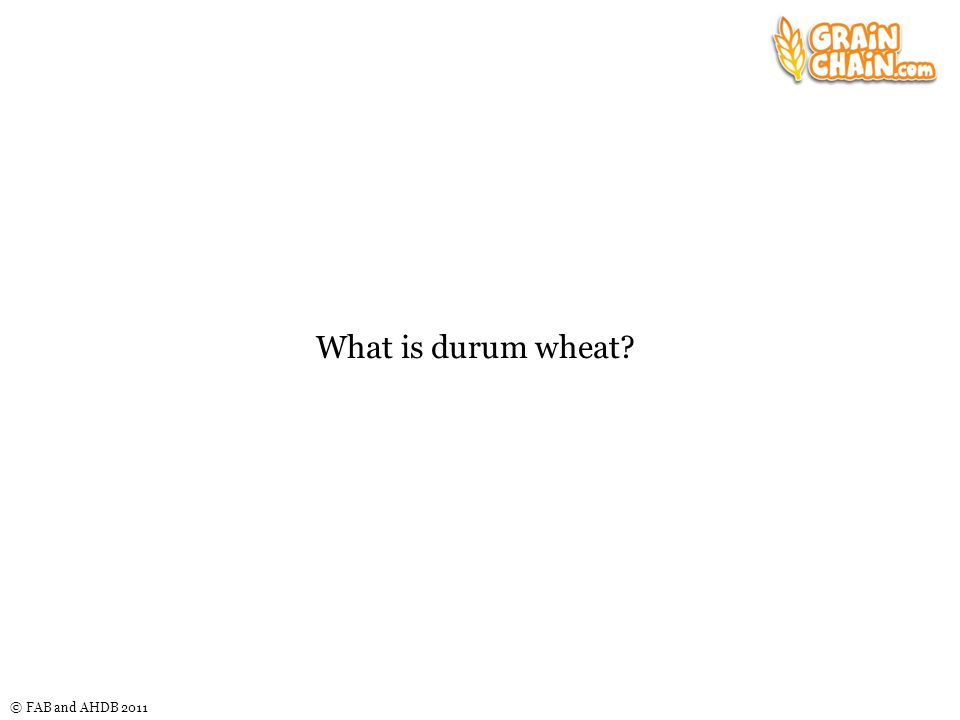 © FAB and AHDB 2011 What is durum wheat?
