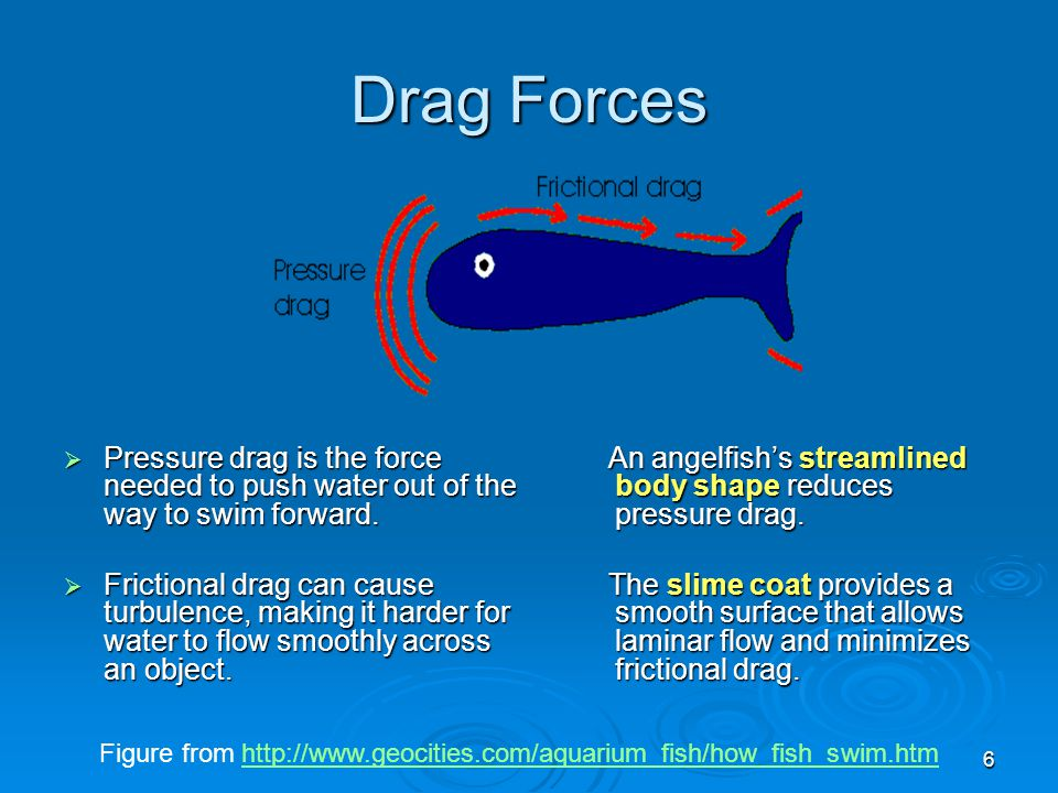 6 Drag Forces  Pressure drag is the force needed to push water out of the way to swim forward.