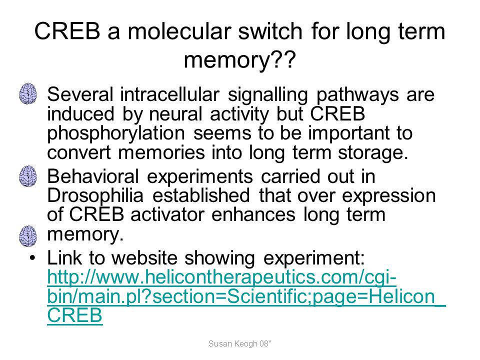 CREB a molecular switch for long term memory?? Several intracellular signalling pathways are induced by neural activity but CREB phosphorylation seems