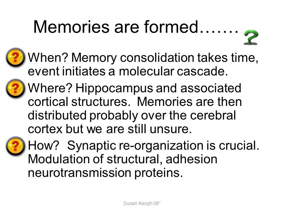 Memories are formed……… When? Memory consolidation takes time, event initiates a molecular cascade. Where? Hippocampus and associated cortical structur